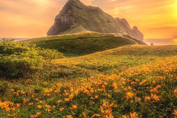 """「どこの天国ですか?」「行きたすぎる」""""花の島""""新潟県・佐渡の初夏が見せる異次元の美しさに反響多数"""
