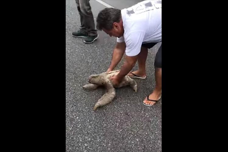 道路に迷い込んでいたナマケモノを救助!安全な場所へ連れて行ってあげると、笑顔でお礼をしてくれた!?
