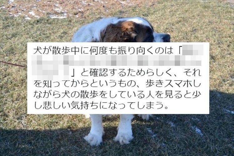 「歩きスマホしながら犬の散歩をしている人を見ると悲しくなる…」犬の気持ちに関するツイートが話題に