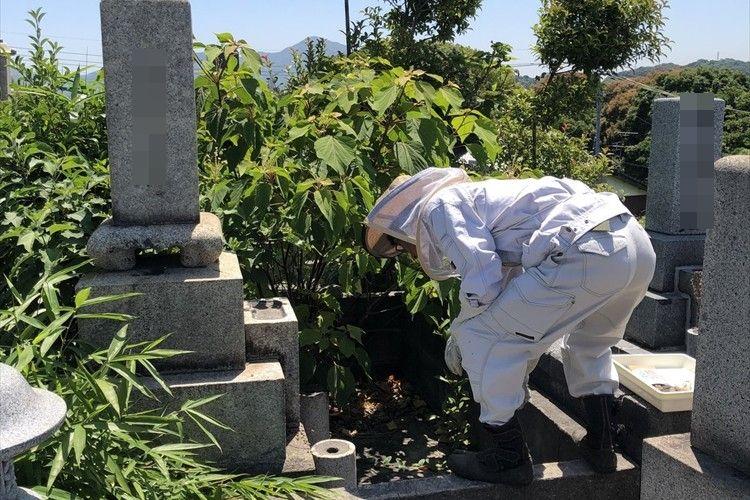 お墓に蜂が発生!養蜂家が登場しお墓の下を見てみると…想像をはるかに超える大きさの巣が出現!