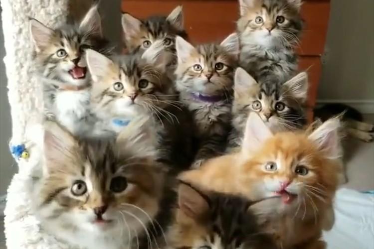 生まれたばかりの9匹の子猫達の息がぴったり!シンクロする光景が可愛すぎる♪
