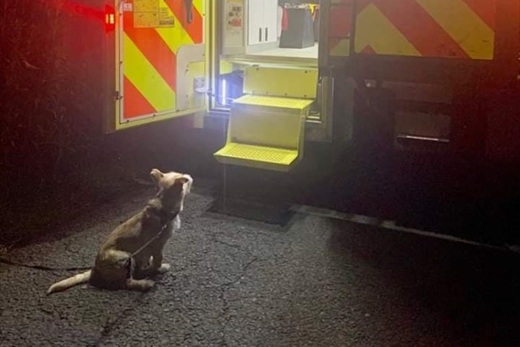 救急車の中で応急処置を受ける飼い主を心配そうに見つめるワンコ…その健気な姿に多くの反響