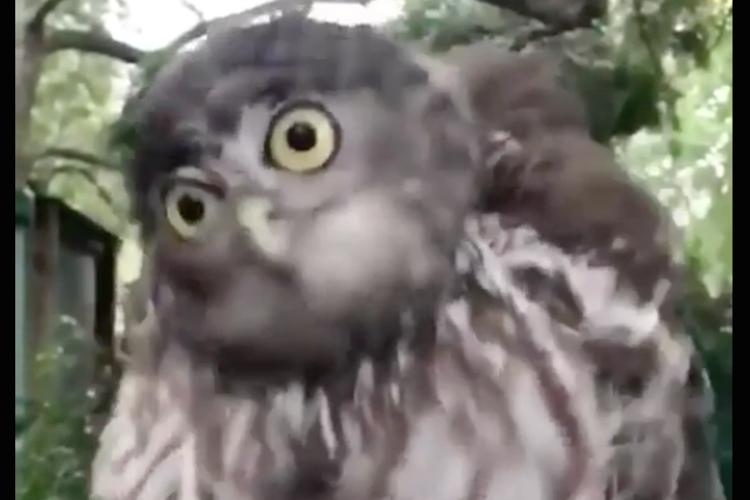 首がグルングルン回転!スローモーションで見るフクロウの動きが面白い!
