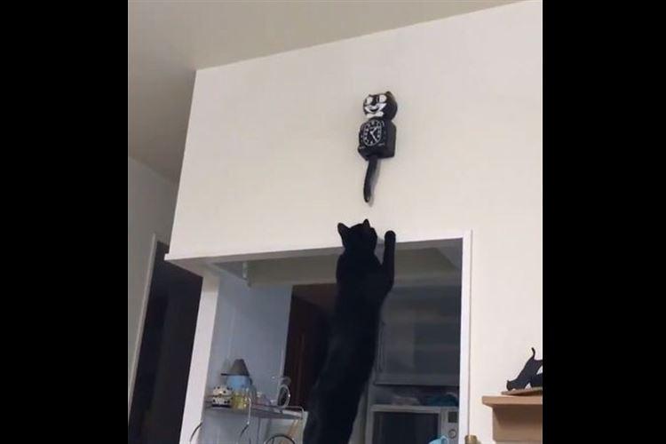 こうなることは予想してたけど…ご主人様のお気に入りの時計を狙う黒猫ちゃんの姿に思わずクスッ
