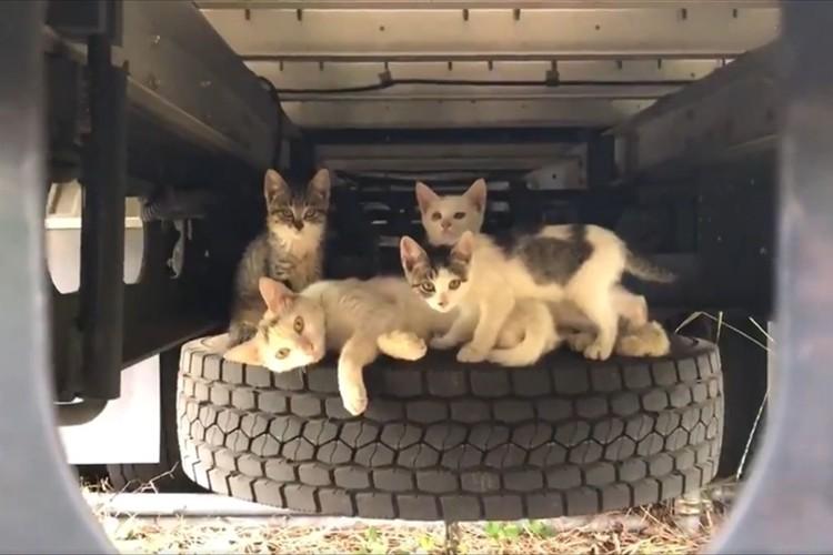 トラックの下をのぞいてみたら多くのニャンコが…冬だけではなく夏でも「猫バンバン」は必要!