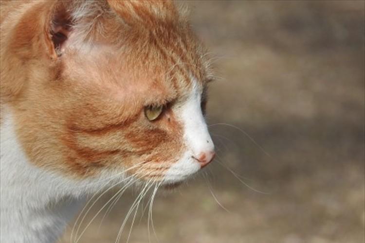 わずか24時間で50匹以上の猫の飼い主が決まる!とある動物保護施設のキャンペーンが話題に