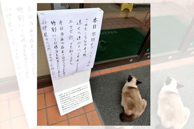「店長の生まれ変わりかもしれませんね」セブンイレブンの入口から離れない猫と貼り紙が話題に