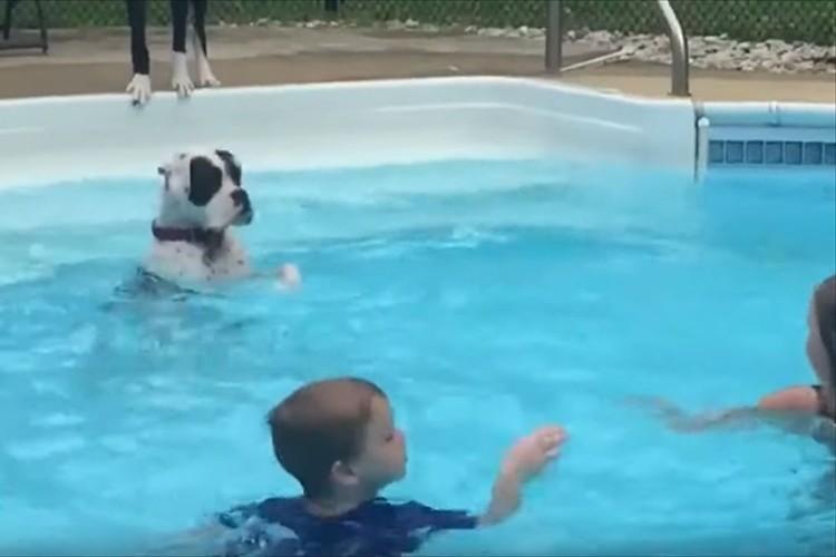 プールでバシャバシャと水面をたたく子供達…その様子を見ていたワンコがとった行動が微笑ましい♪