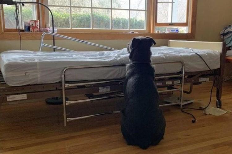 大好きだった飼い主をガンで亡くしてしまったワンコ…ベッドの近くで佇む後ろ姿に心が痛む
