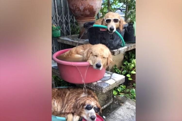 ナイスアイディアな水風呂で涼む3匹のワンコ♪ 可愛すぎるし、ツッコミどころも満載