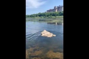 モップが浮いていると思いきや・・・よく見てみるとその正体は『あの動物』だった!!