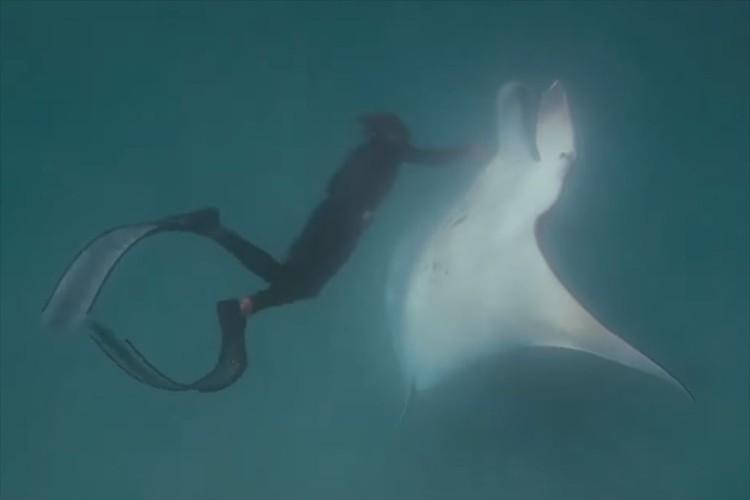 「明らかに助けを求めていた」釣り針が刺さったマンタをダイバーが救助!心を通い合わせたシーンに感動