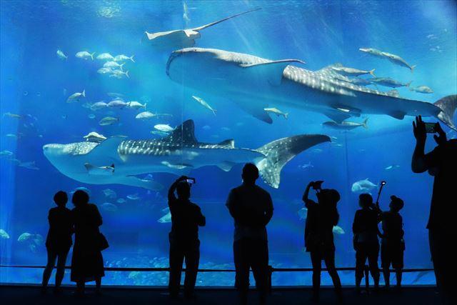 巨大生物が多い海