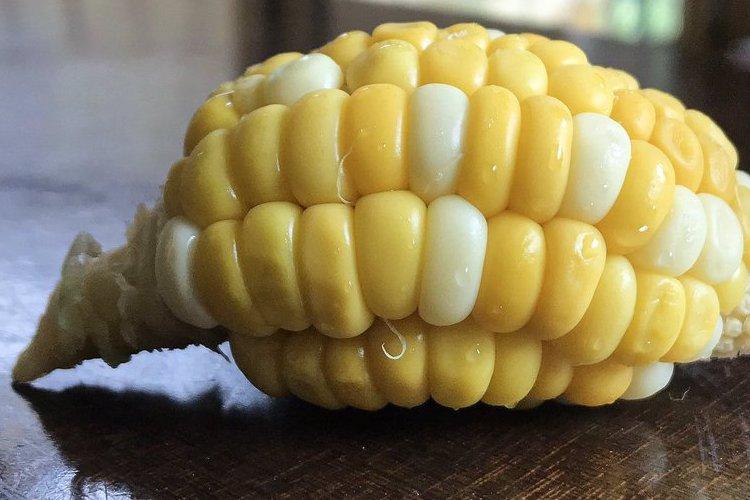 実家で取れた変わった形のトウモロコシ、もうアレにしか見えない!