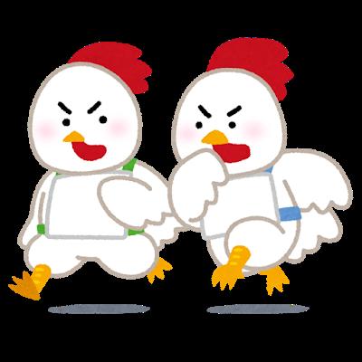 運動する鶏