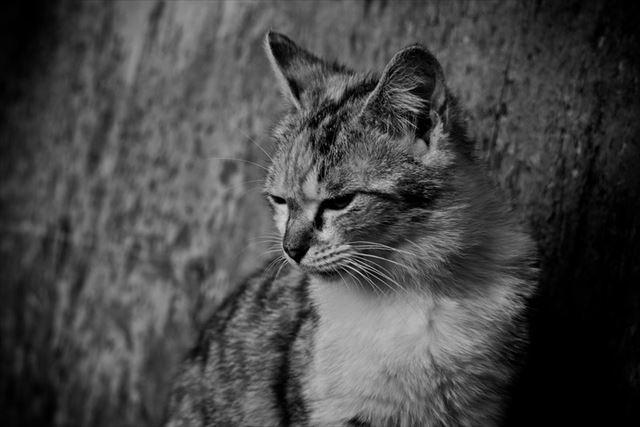 がっかりする猫