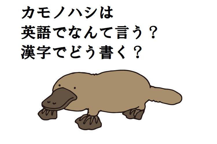 「カモノハシ」って英語や漢字ではどう書くの?ほ乳類なのに卵から生まれる謎の生態も紹介