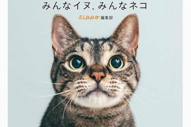 写真集『みんなイヌ、 みんなネコ』が発売!元保護犬・猫が新しい家族のもとで幸せに暮らす姿がそこに