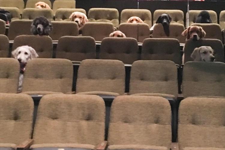 劇場の観客席で、お行儀よくミュージカルを鑑賞する12匹のワンコ・・その理由とは?