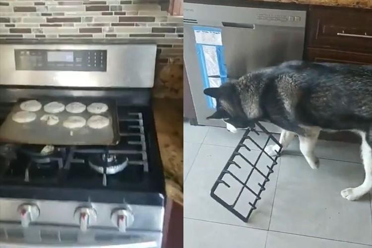 キッチンから物音がしたと思ったら、焼く前のクッキーが4個紛失・・犯人はあっさり見つかる(笑)