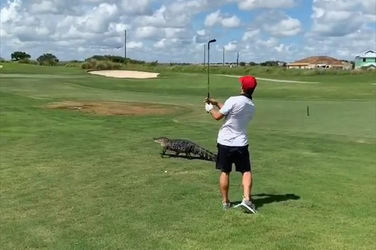 目の前をワニが通過するもプレーを続行!命がけのショットを放ったゴルファーが話題に