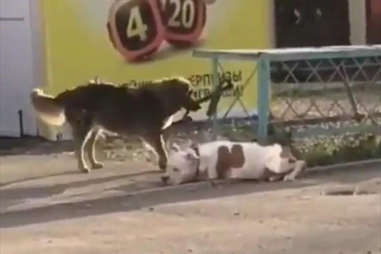 「助けなきゃ!」飼い主が買い物中、店外でつながれていたワンコを救助しようとした野良犬…その優しさに感動