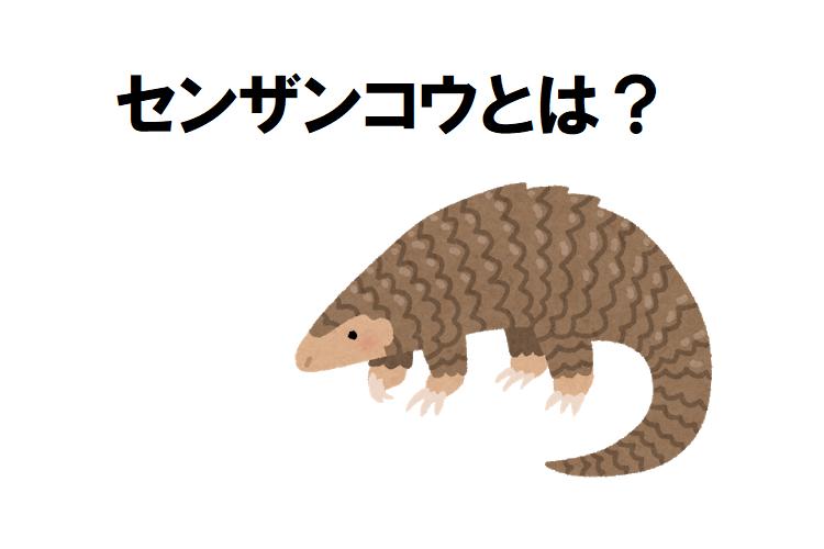 鱗が特徴的な「センザンコウ」ってどんな生き物?その姿が見られる動物園はどこ?
