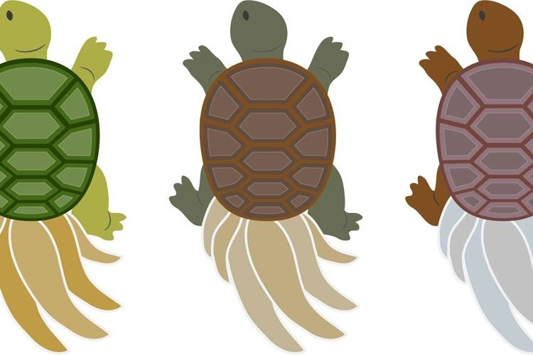 クサガメとミドリガメの寿命はどのくらい?どちらが長い?やはり亀は長寿なのか?