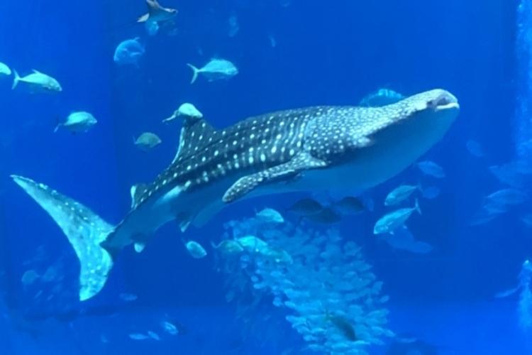 世界一大きい魚は何?ジンベエザメ以外にも可能性が!