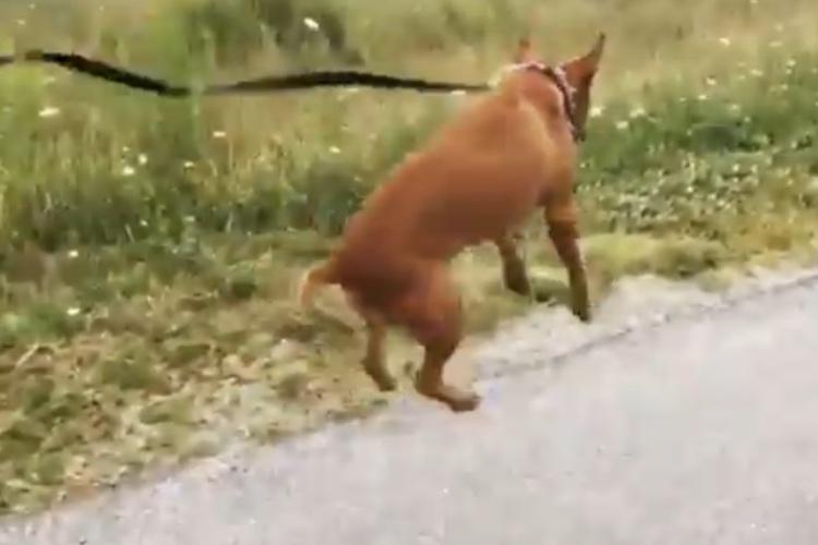 「最高だワン!」初めて散歩に出かけた保護犬、嬉しさをジャンプで表現