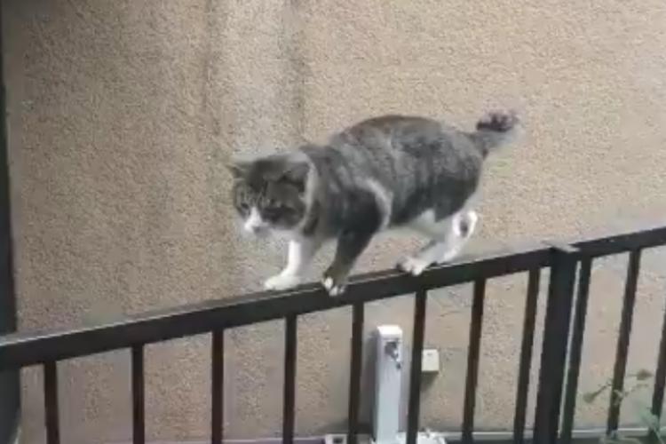 噂話はやめてあげて(笑) 柵の上でプルプルしてる猫と、それを見てヒソヒソ話する猫たち