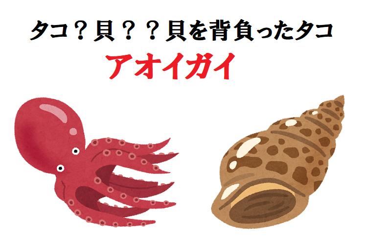 タコなの?それとも貝??貝を背負ったタコ「アオイガイ」