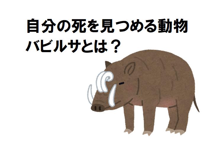 不思議な動物「バビルサ」の牙が伸びすぎて自分を刺してしまう?自分の死を見つめるといわれる所以