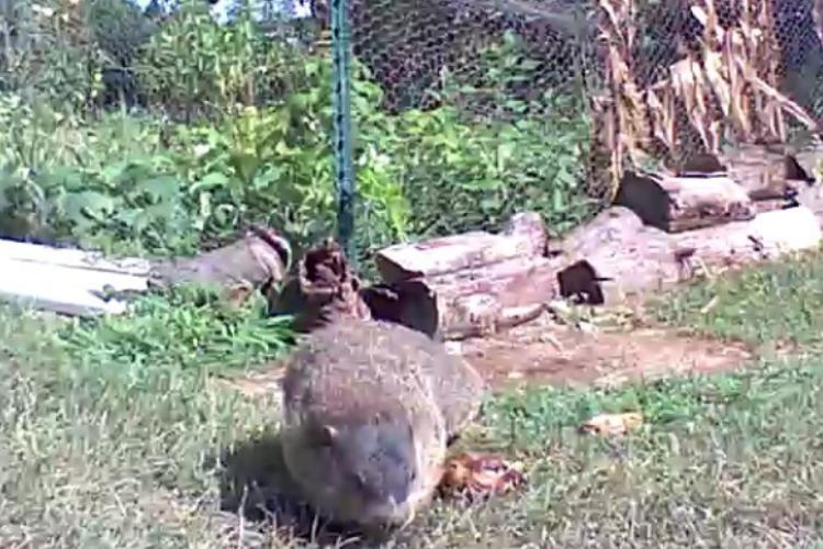 野菜泥棒の正体判明!カメラに映っていた犯人の面白可愛さに園芸家も心奪われる(笑)
