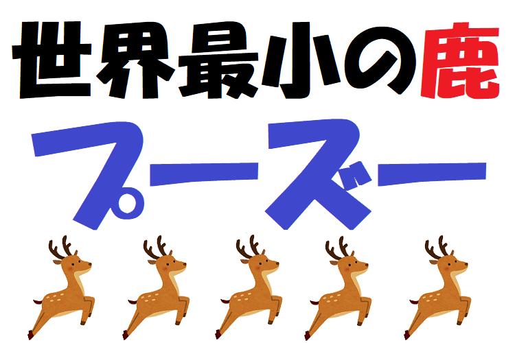 世界最小の鹿「プーズー」とは?ぬいぐるみのような姿を見に動物園に行きたい!
