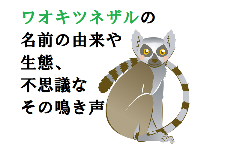 ワオキツネザルの「ワオ」って何?名前の由来や生態、全国の動物園も紹介!