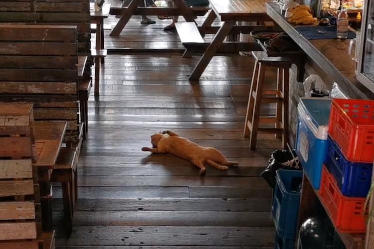 気持ちいいにゃ〜!レストランのど真ん中で大胆にくつろぐニャンコに胸キュン