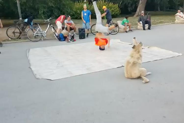 ボクもできるワン!ブレイクダンサーに触発された野良犬が一緒にクルクルと踊る♪
