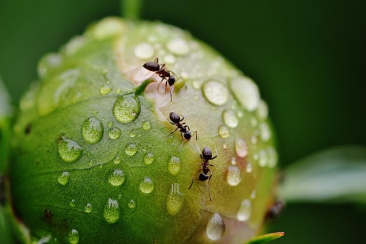日本は最強の虫の宝庫だった!外来種が根付きづらい昆虫修羅の国
