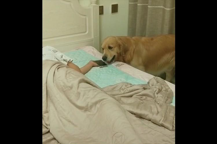 眠っている飼い主のスマホを所定の位置へ戻し、毛布をかけ、部屋の電気を消すワンコが賢すぎる!