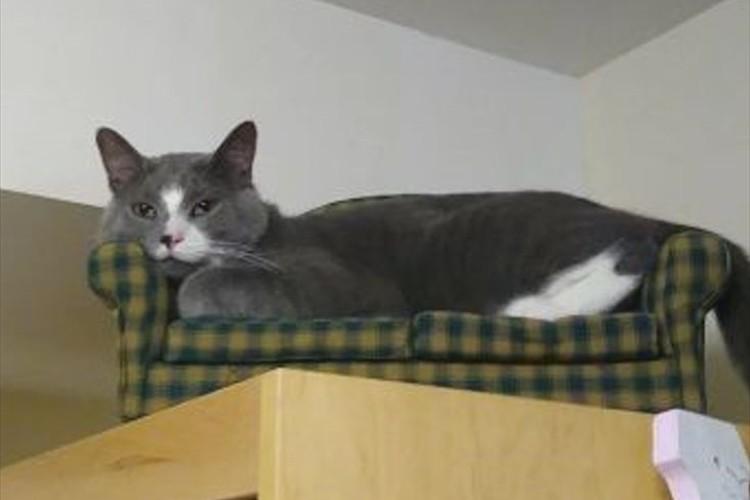 ニャンコのためにソファーを購入!期待していなかったけれど、ちゃんと使ってくれていた(笑)