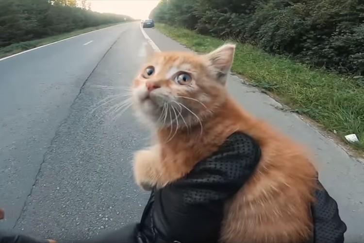 走行中に道路の真ん中にいる子猫を発見!救助を試みた2人の男性に称賛の声