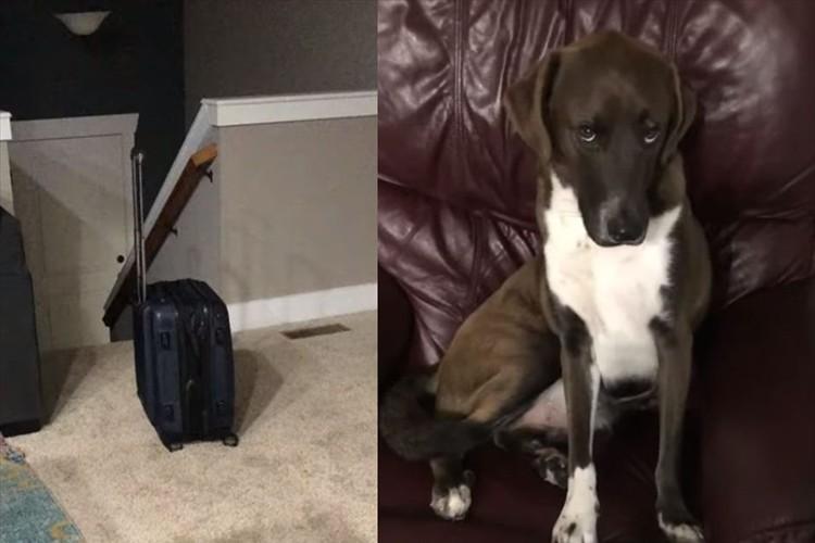 スーツケースを見て飼い主さんのお出かけを察知・・ふてくされてしまうワンコが愛おしい