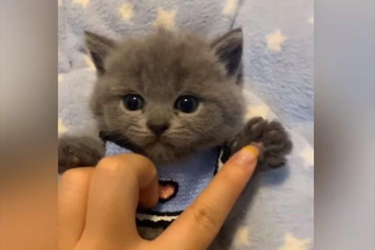 優しくナデナデされて、うっとりしている子猫の動画に反響「ずっと見ていたい」「反則級の可愛さ」