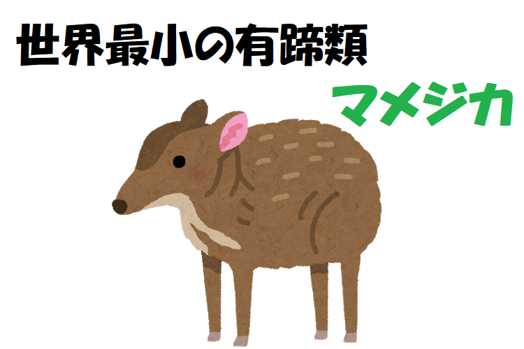 世界最小の有蹄類、マメジカ!ペットにしたくなるかわいいこの子はどこで見られるの?