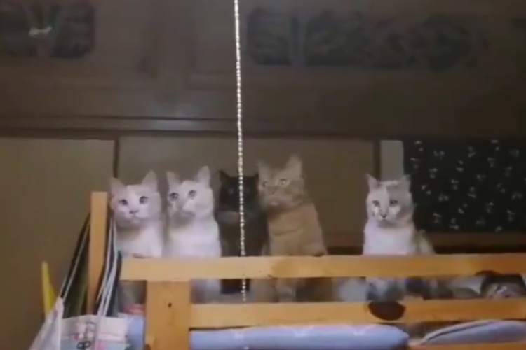 まるでドラゴンボール(笑) 家の中にカメムシが入ってきたときの猫ちゃんたちの反応が面白カワイイ