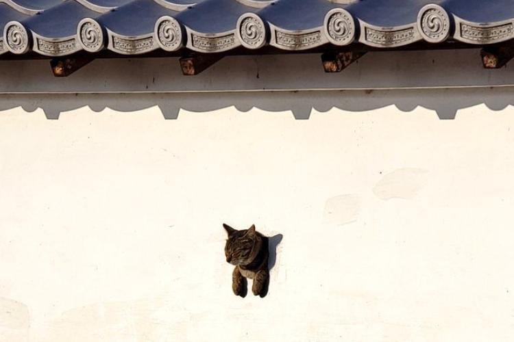 もはや猫山城!?国宝・犬山城の狭間からひょっこり顔や尻尾を出すニャンコが可愛すぎた♪
