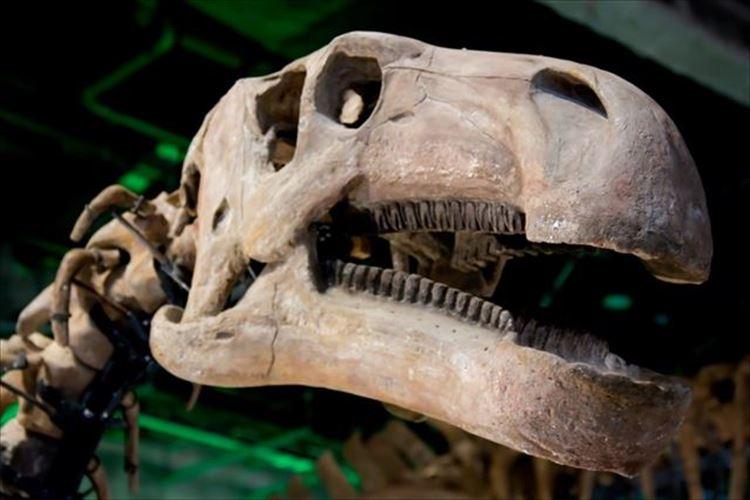 未だに決着しないティラノサウルス羽毛説!羽毛はあったのか?なかったのか?
