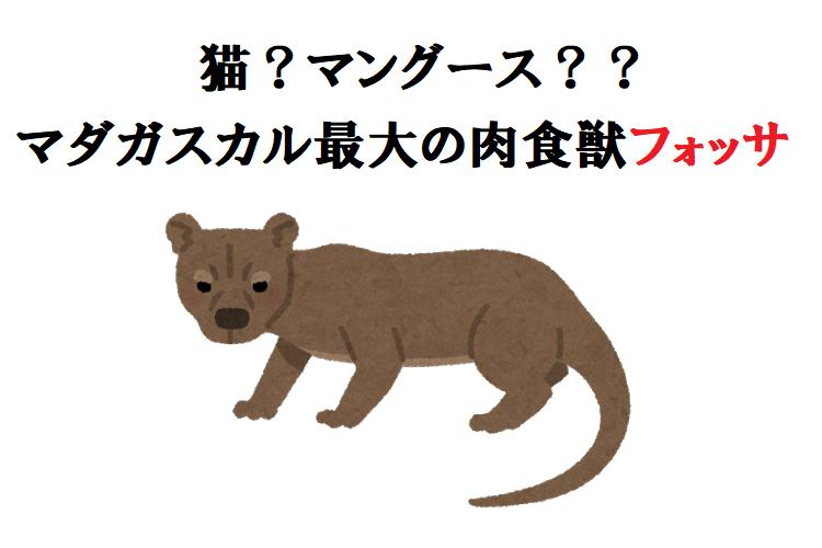 猫?それともマングース?マダガスカル最大の肉食獣「フォッサ」について調べてみた