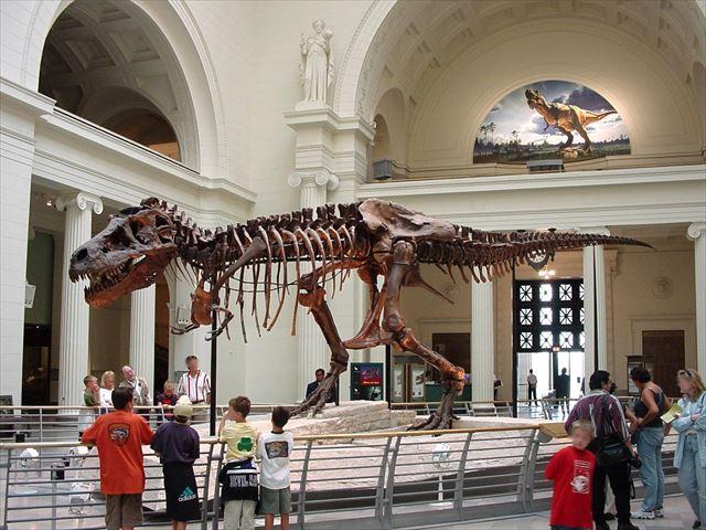 フィールド自然史博物館にいるティラノサウルスのスーちゃん